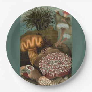 19th century print sea anemones 9 inch paper plate