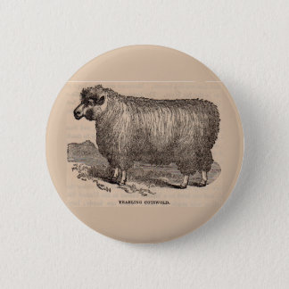 19th century print yearling Cotswold sheep 2 Inch Round Button