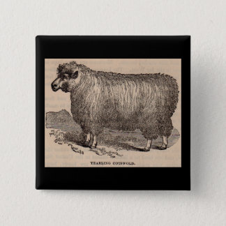 19th century print yearling Cotswold sheep 2 Inch Square Button