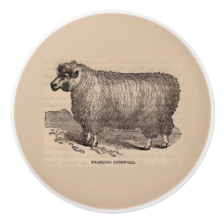 19th century print yearling Cotswold sheep Ceramic Knob