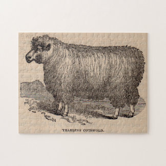 19th century print yearling Cotswold sheep Jigsaw Puzzle