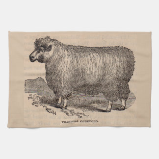 19th century print yearling Cotswold sheep Kitchen Towel