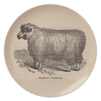 19th century print yearling Cotswold sheep Plate