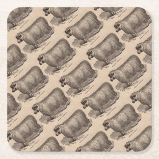19th century print yearling Cotswold sheep Square Paper Coaster