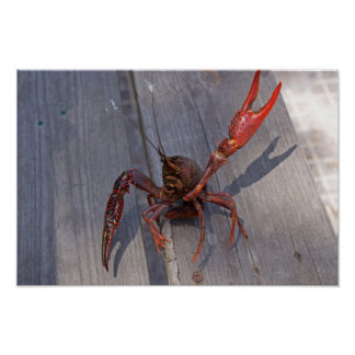 1 crawfish poster