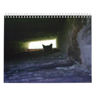 2009 Loving the Feral Soul Inc. Feral Cat Calendar