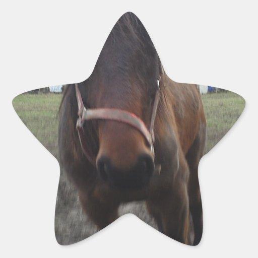 2011 foto 079.jpg star stickers