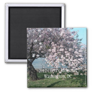 2012 Cherry  Blossoms Products Square Magnet