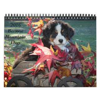 2016 Bernese Mountain Dog Calendar