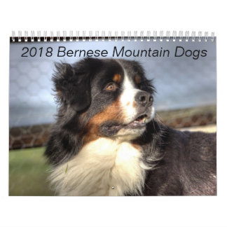 2018 Bernese Mountain Dog Calendar