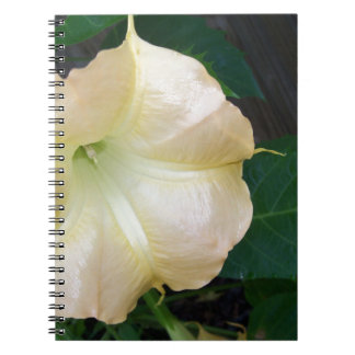 202a Angels trumpet  golden close up Notebook
