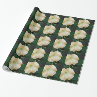 202a Angels trumpet  golden close up Wrapping Paper