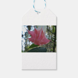 205a Angels trumpet pink close Gift Tags