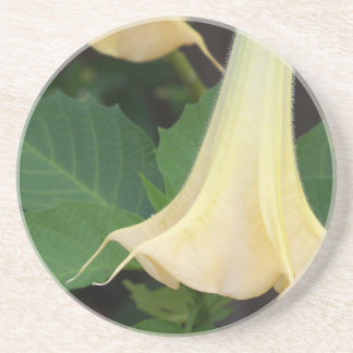 206a Angels trumpet yellow close up Coaster