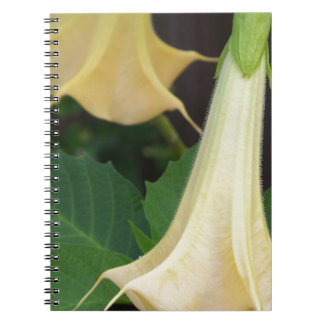206a Angels trumpet yellow close up Notebook
