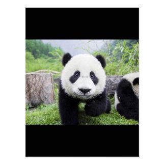 20_baby_animals (9) CUTE PANDA CUB WILD ANIMALS Postcard