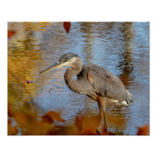 20x16 Great Blue Heron framed with fall foliage Poster
