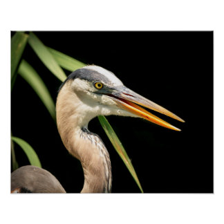 20x16 Great Blue Heron Poster