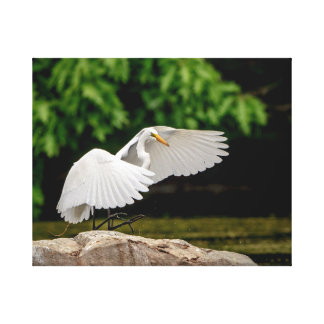 20x16 Great Egret Canvas Print