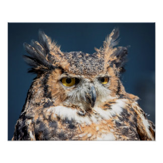 20x16 Great Horned Owl Portrait Poster