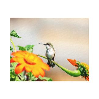 20x16 Hummingbird on a flowering plant Canvas Print
