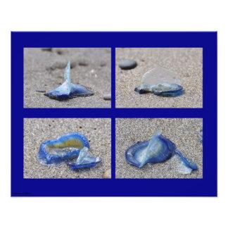 20X16 Jellyfish Photographic Print