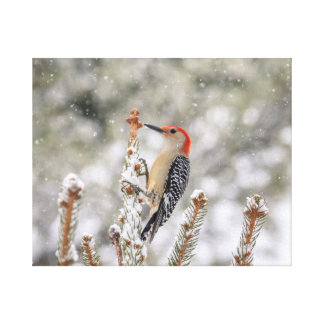 20x16 Red-bellied Woodpecker in the snow Canvas Print