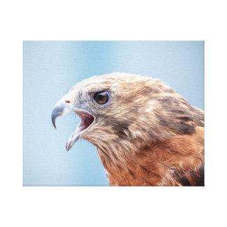 20x16 Red Shouldered Hawk Canvas Print
