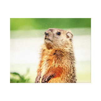 20x16 Young Groundhog Canvas Print