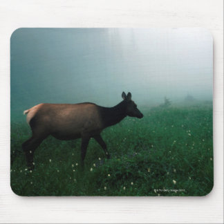 24121885 MOUSE PAD
