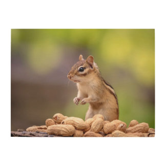 24x18 Chipmunk with peanuts Wood Wall Art