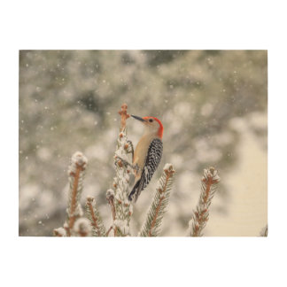 24x18 Red-bellied Woodpecker in the snow Wood Print