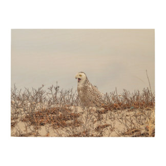 24x18 Snowy owl sitting on the beach Wood Wall Decor