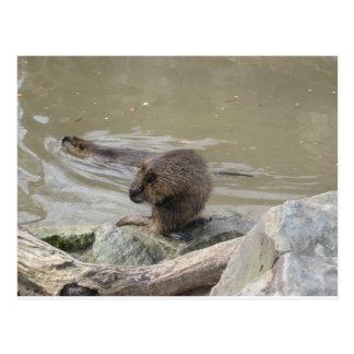 2 beavers postcard