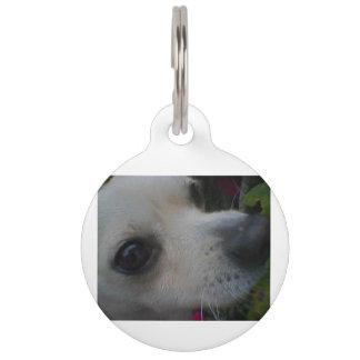 2 chihuahua pet ID tag