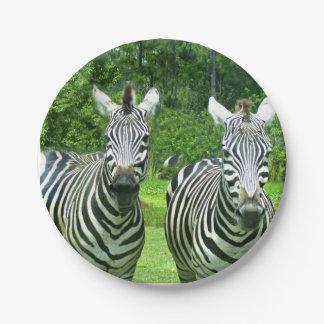 2 Cute Zebras Paper Plate
