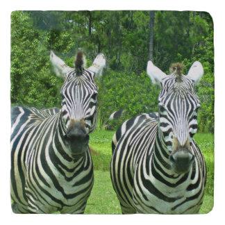 2 Cute Zebras Trivet