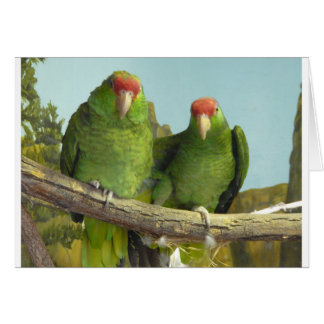2 green parrots greeting card
