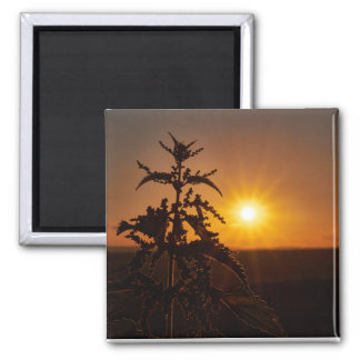 2 Inch Square Magnet with a beautiful sunset