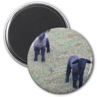 2 Lambs Magnet