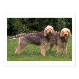 2 otterhounds full.png postcard