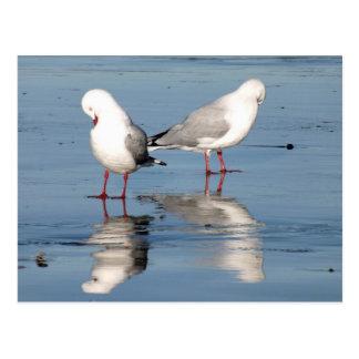2 Seagulls on a Beach Postcard