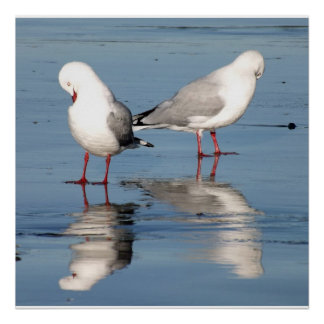 2 Seagulls on a Beach Poster