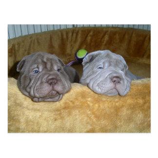 2 shar pei puppies.png postcard