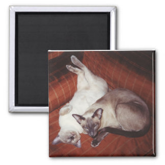 2 Siamese Cats: Tortie and Seal Point Square Magnet
