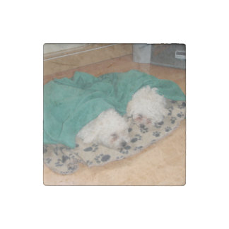 2 Sleepy_Bichon_Puppies Stone Magnets