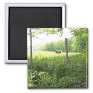 "2"" square magnet cow scene"