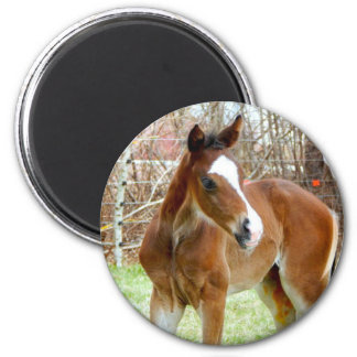 2CUTE HORSE FOAL BABY PONY 2 INCH ROUND MAGNET