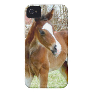 2CUTE HORSE FOAL BABY PONY iPhone 4 COVER