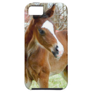 2CUTE HORSE FOAL BABY PONY iPhone 5 CASES